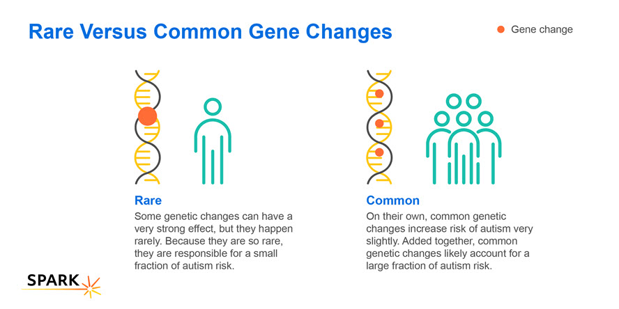 this illustration explains rare and common gene changes